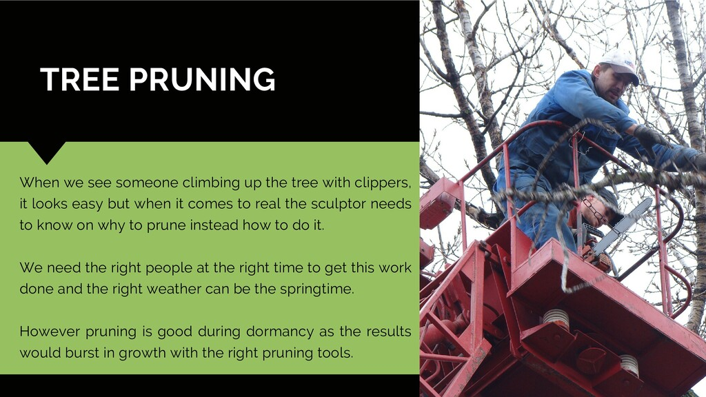 TREE PRUNING When we see someone climbing up th...