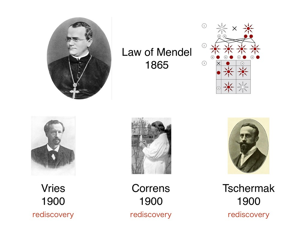 Vries 1900 Law of Mendel 1865 Correns 1900 Ts...