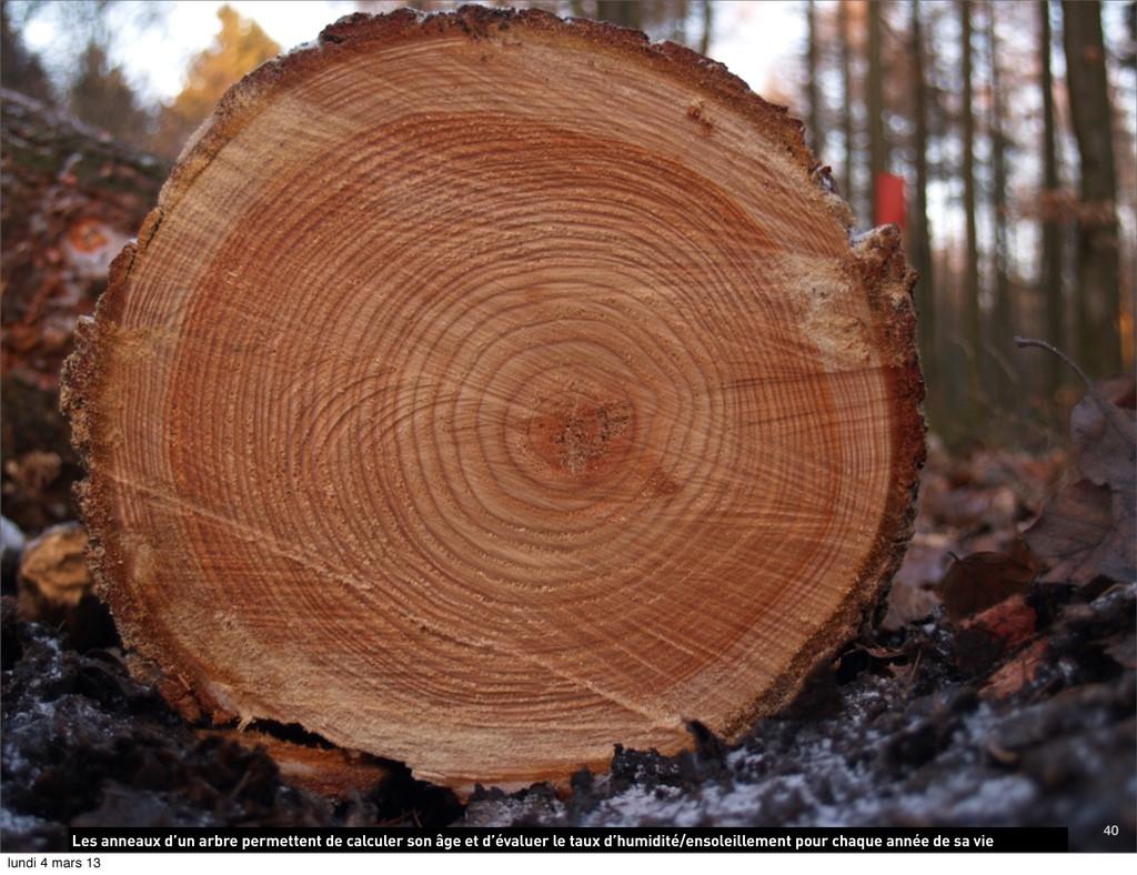 Les anneaux d'un arbre permettent de calculer s...