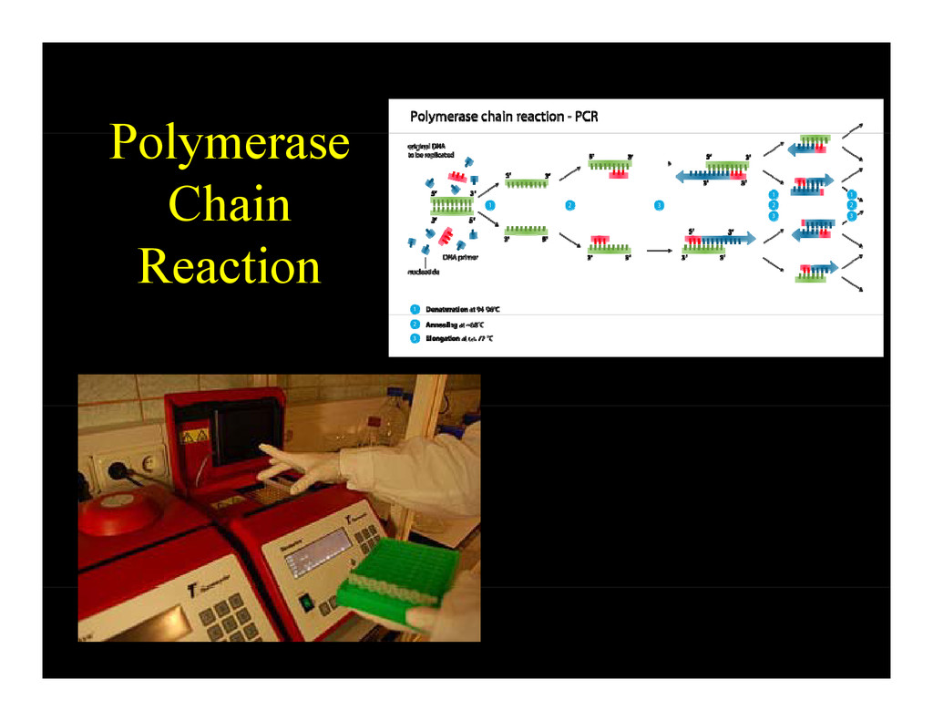 P l Polymerase Chain Reaction