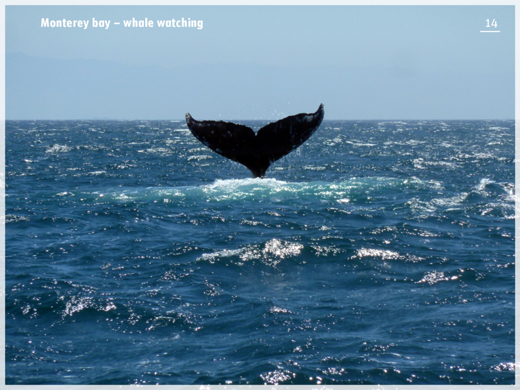 Monterey bay – whale watching 14