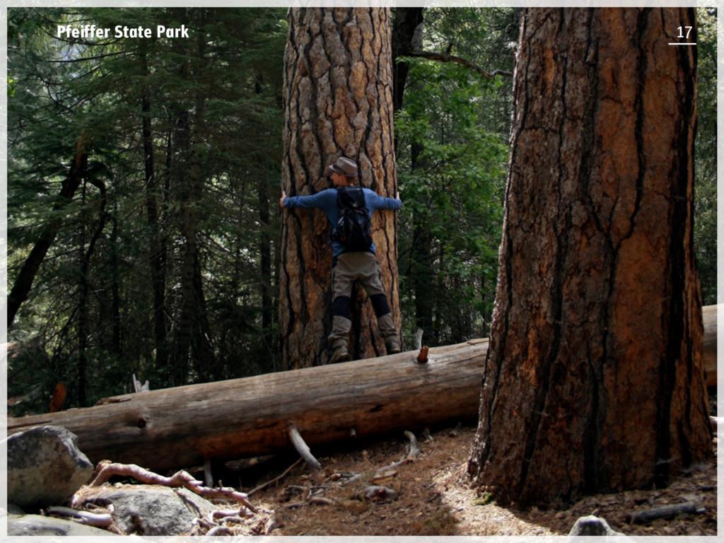 Pfeiffer State Park 17