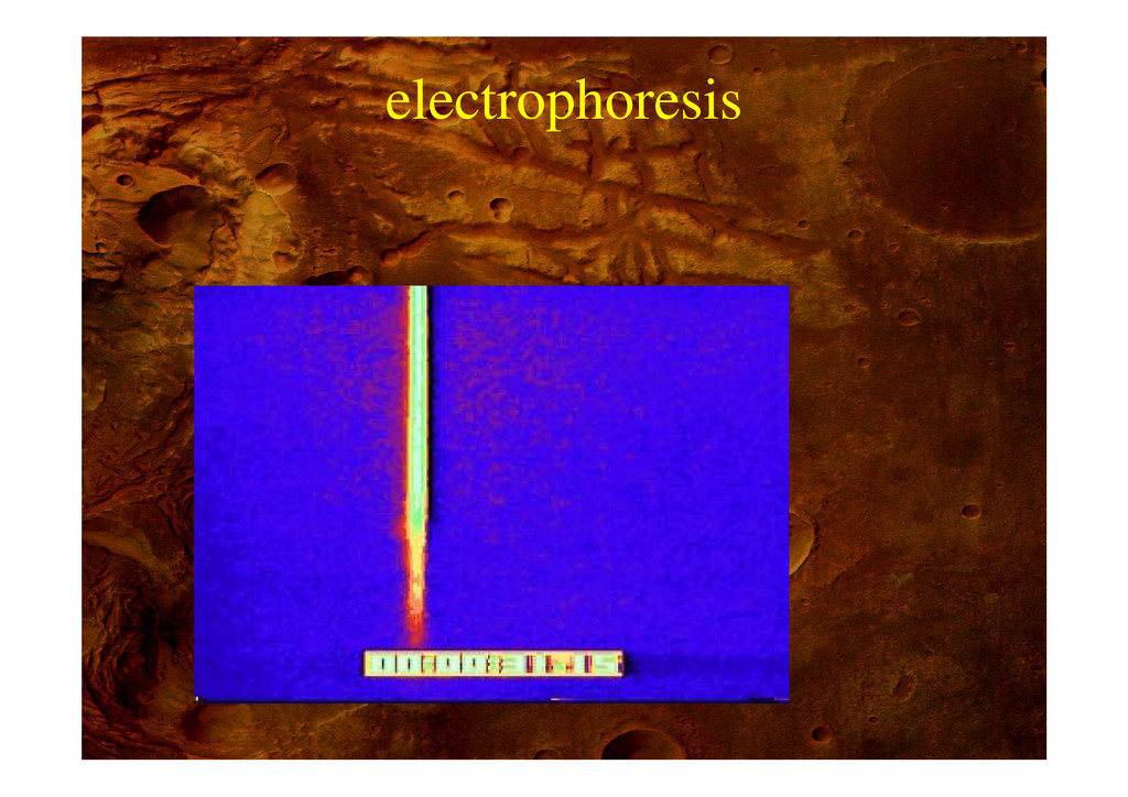 electrophoresis p
