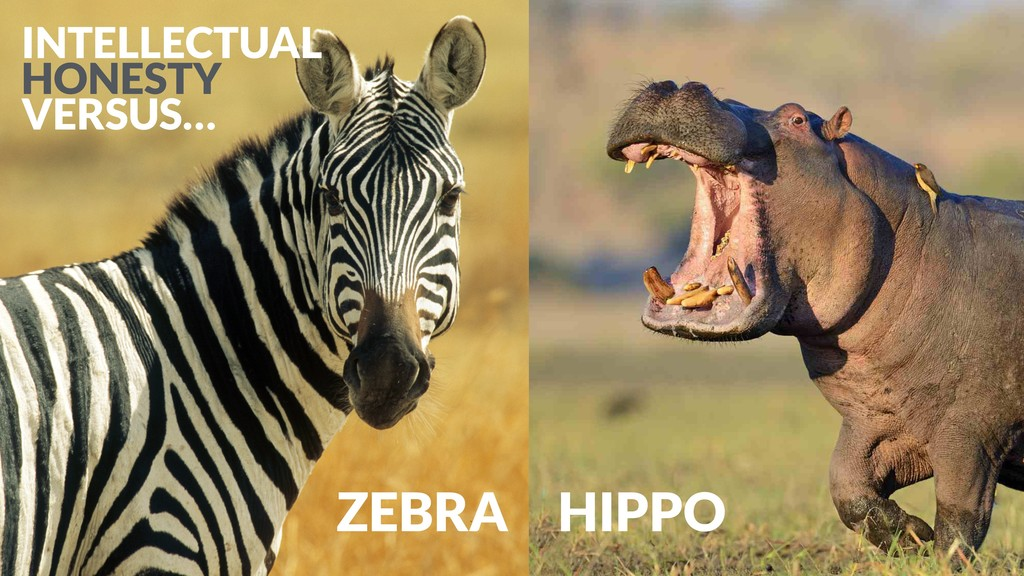 ZEBRA HIPPO INTELLECTUAL HONESTY VERSUS…