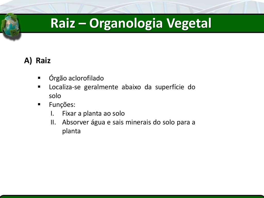 Raiz – Organologia Vegetal A) Raiz  Órgão aclo...