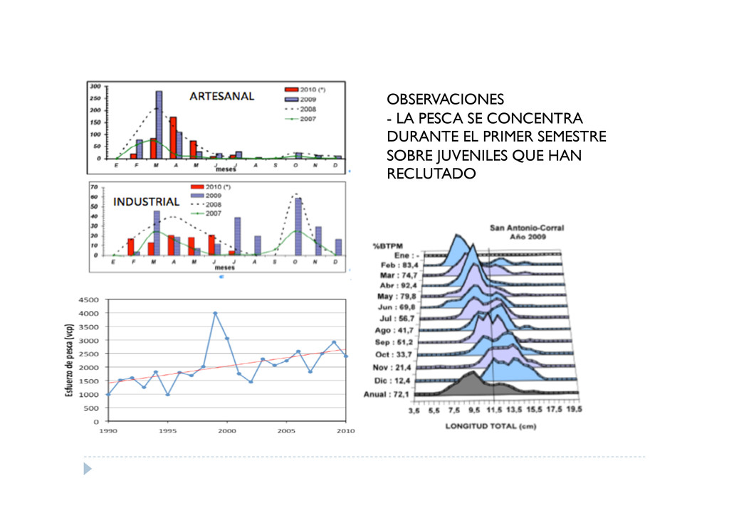 OBSERVACIONES - LA PESCA SE CONCENTRA DURANTE E...