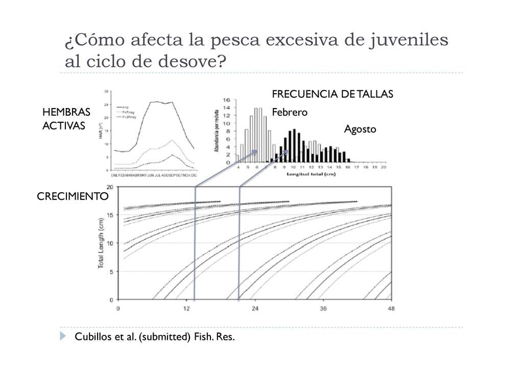 ¿Cómo afecta la pesca excesiva de juveniles al ...