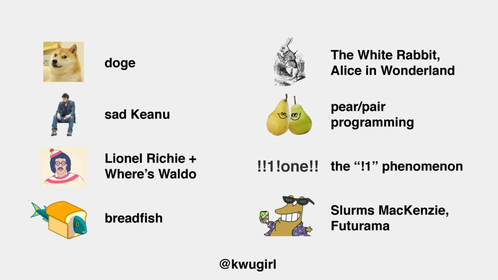 @kwugirl doge The White Rabbit, Alice in Wonder...
