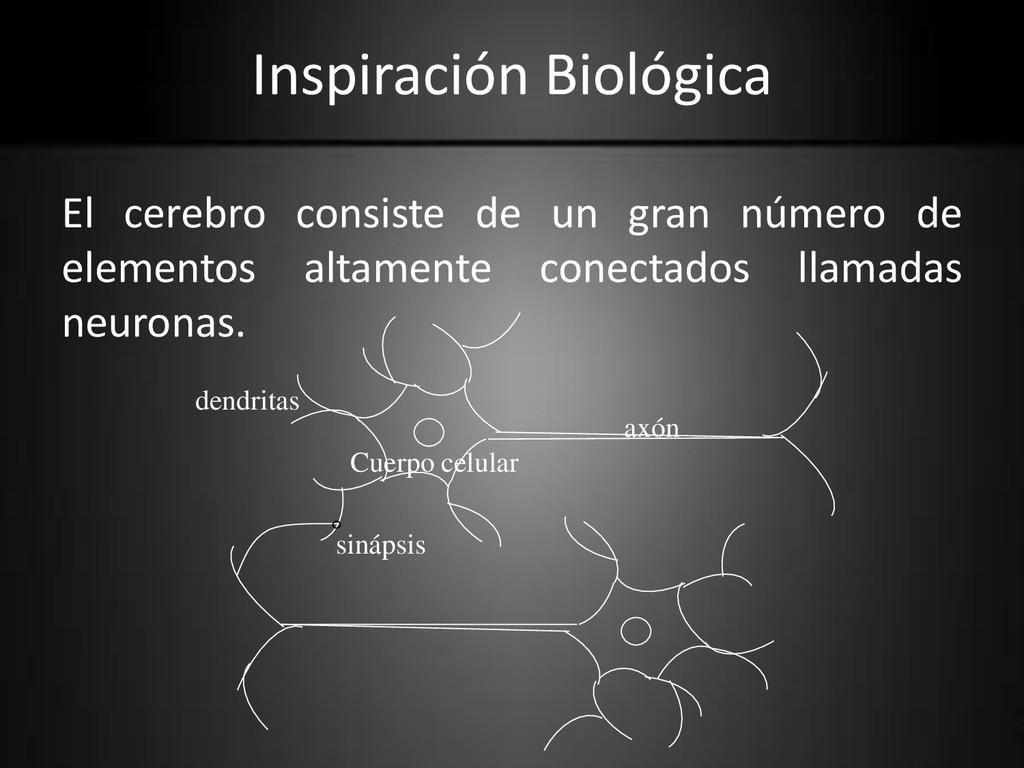 Inspiración Biológica El cerebro consiste de un...