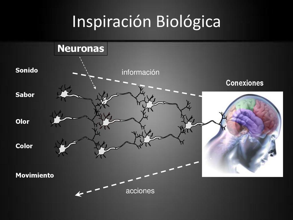 Inspiración Biológica Color Sabor Olor Sonido M...