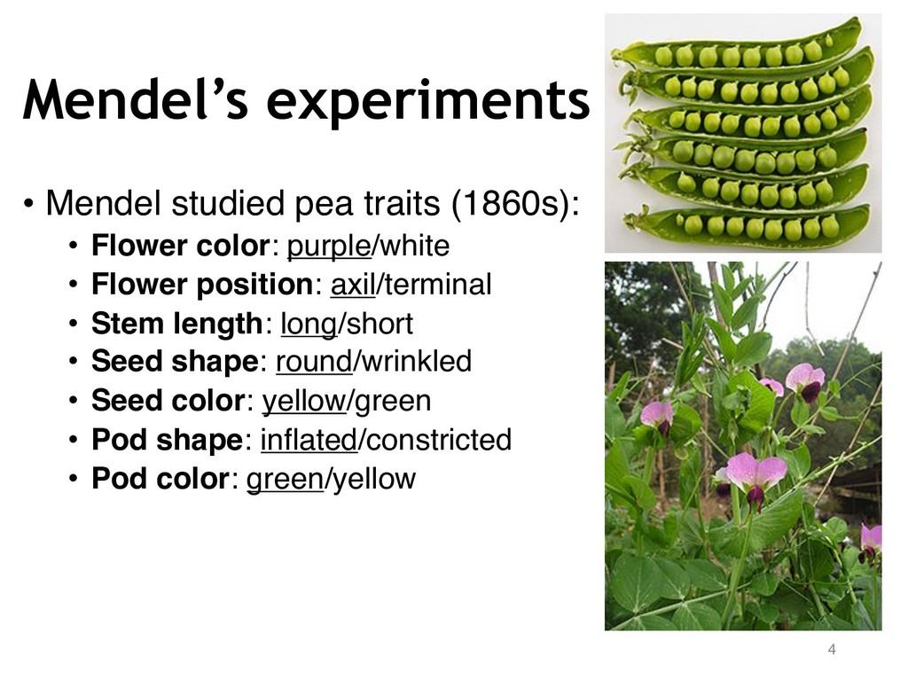 Mendel's experiments 4 • Mendel studied pea tra...