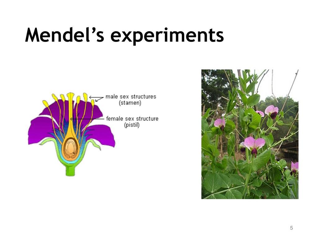 Mendel's experiments 5