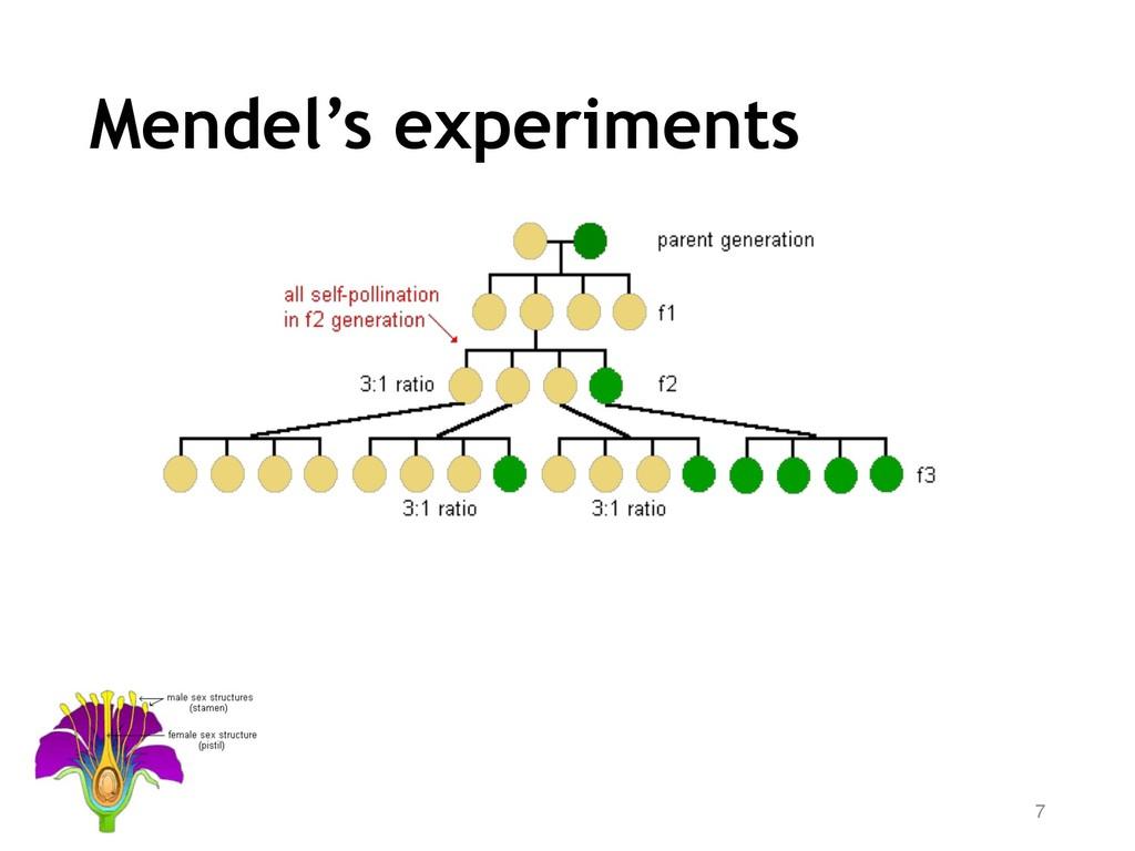 Mendel's experiments 7