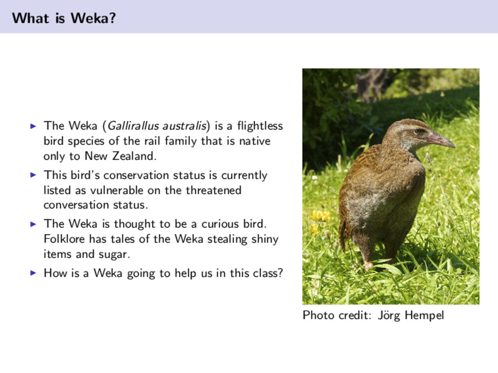 What is Weka? The Weka (Gallirallus australis) ...