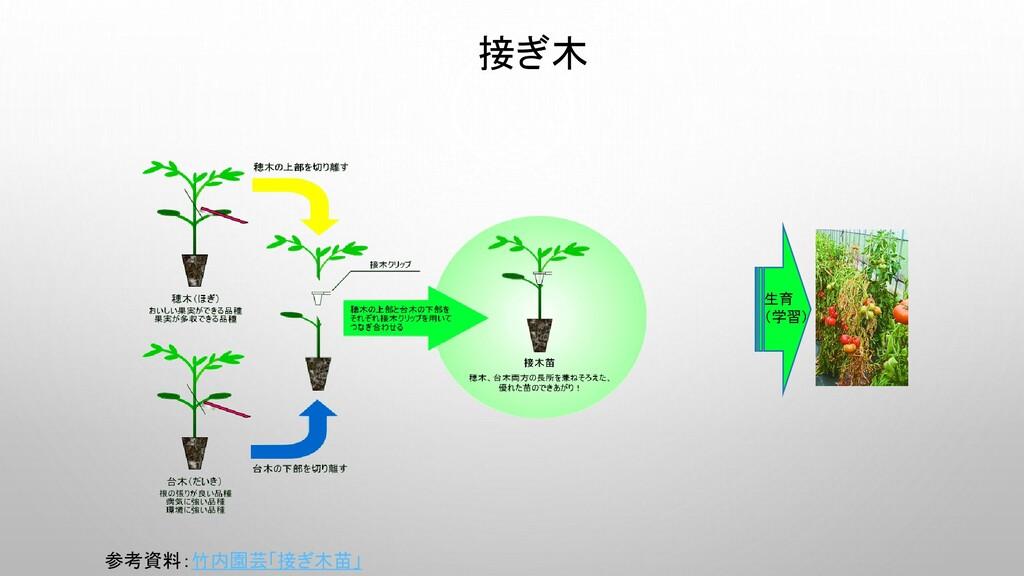 接ぎ木 生育 (学習) 参考資料:竹内園芸「接ぎ木苗」