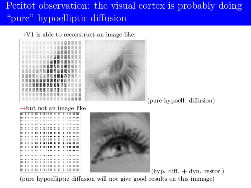 Petitot observation: the visual cortex is proba...
