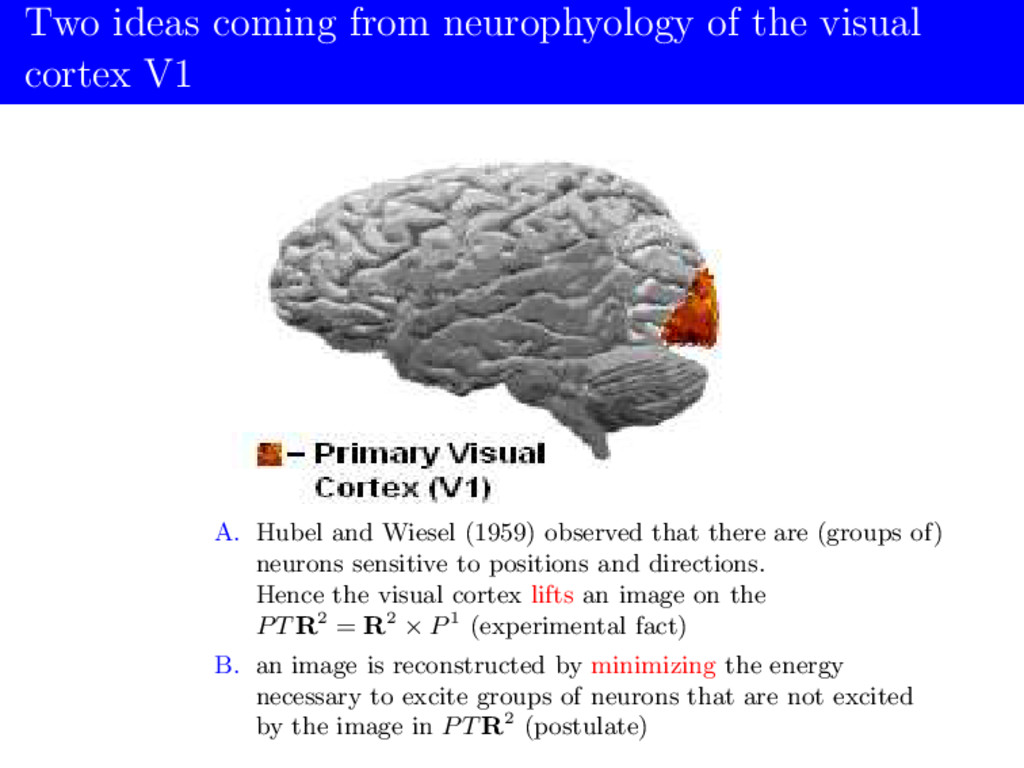 Two ideas coming from neurophyology of the visu...