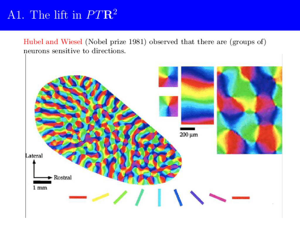A1. The lift in PTR2 Hubel and Wiesel (Nobel pr...