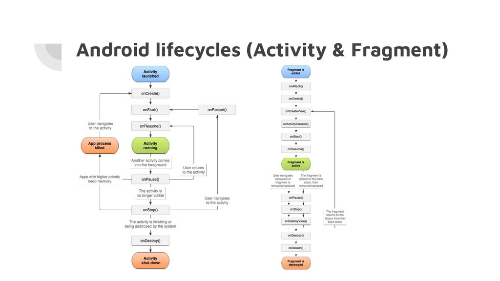 Android lifecycles (Activity & Fragment)
