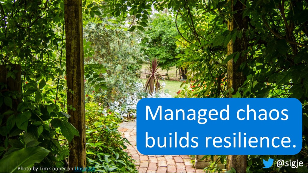 Managed chaos builds resilience. Photo by Tim C...