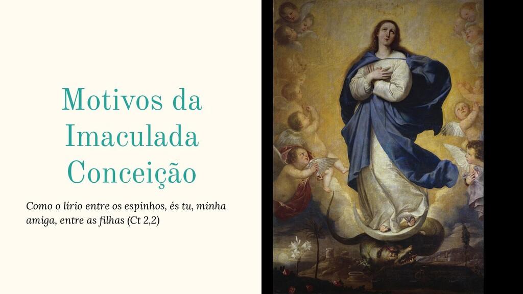 Motivos da Imaculada Conceição Como o lírio ent...