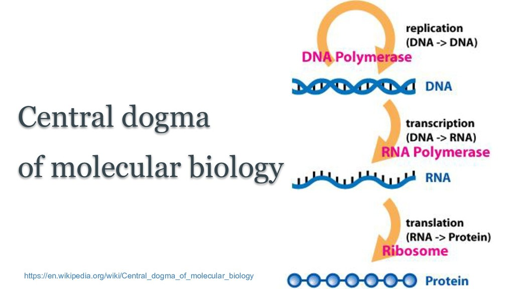 Central dogma of molecular biology https://en.w...