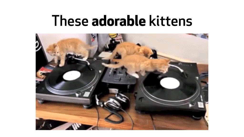 These adorable kittens