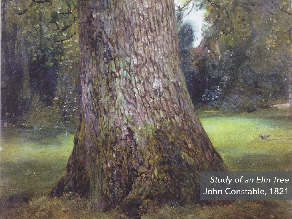 Study of an Elm Tree John Constable, 1821