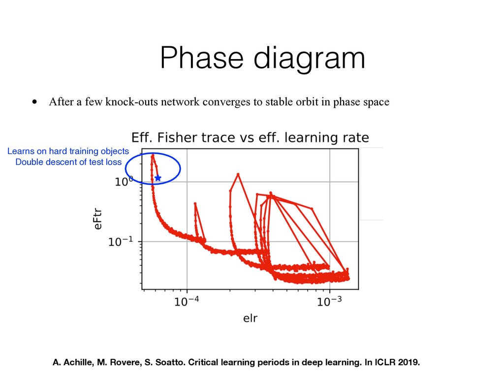Phase diagram • After a few knock-outs network ...