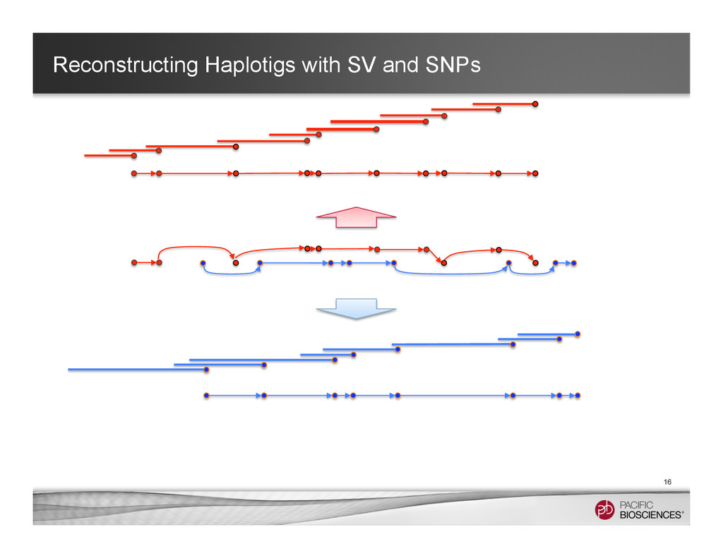 Reconstructing Haplotigs with SV and SNPs 16