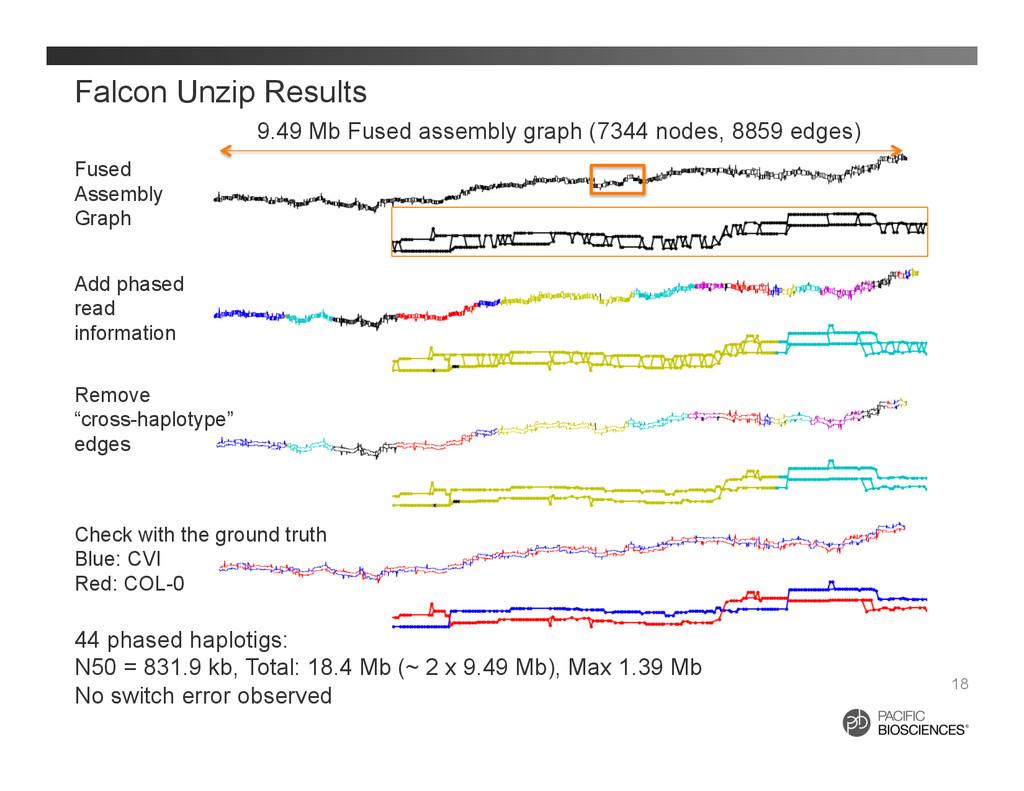 Falcon Unzip Results 18 Fused Assembly Graph Ad...