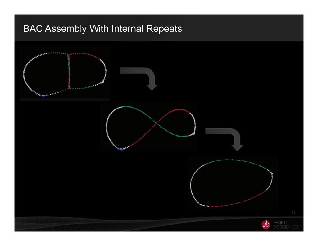 BAC Assembly With Internal Repeats 23