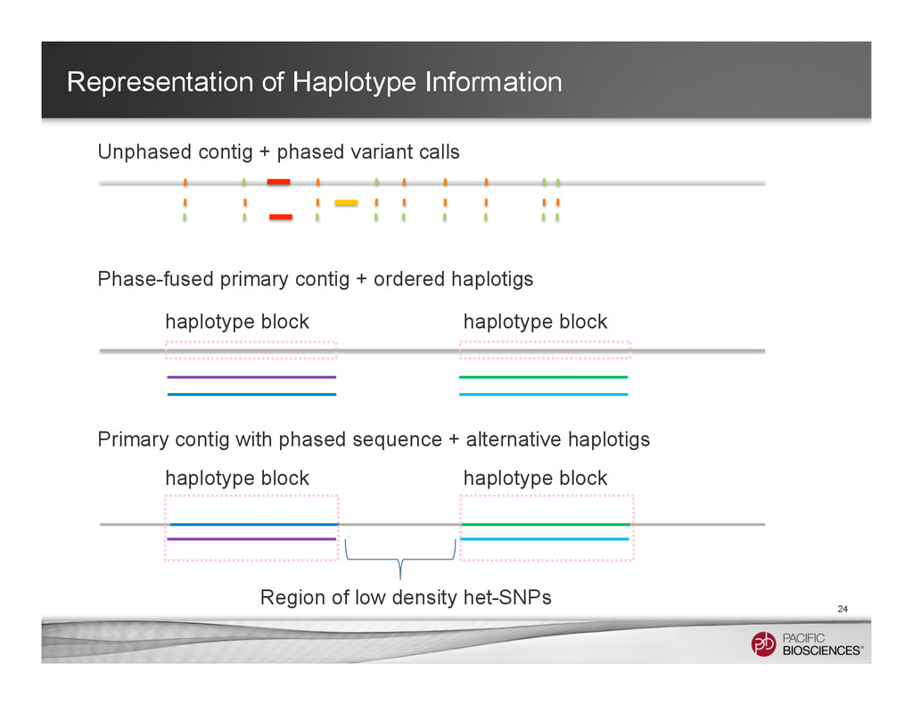Representation of Haplotype Information 24 Unph...