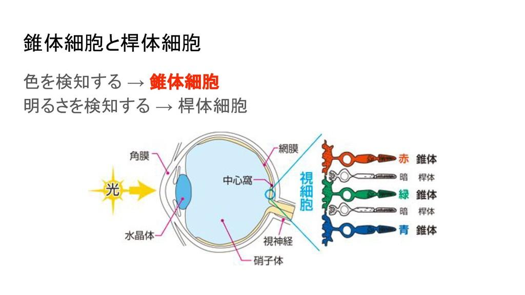 錐体細胞と桿体細胞 色を検知する → 錐体細胞 明るさを検知する → 桿体細胞