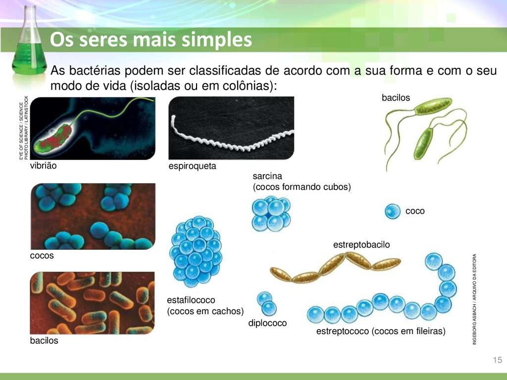 Os seres mais simples As bactérias podem ser cl...