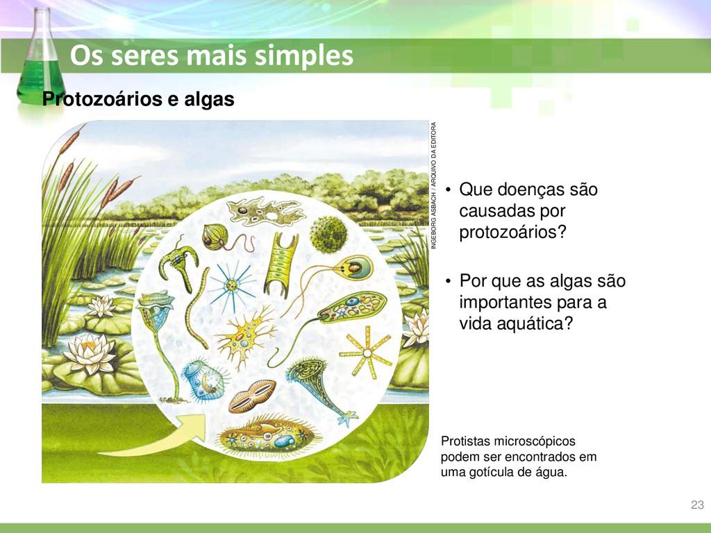Os seres mais simples Protozoários e algas • Qu...
