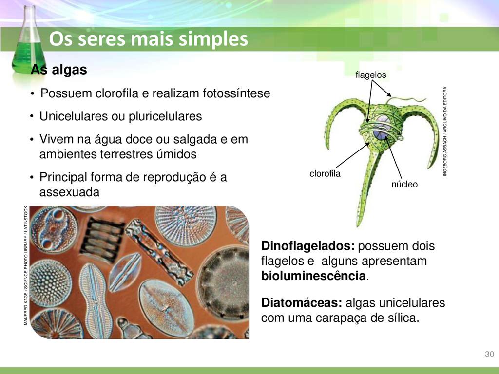 Os seres mais simples As algas Dinoflagelados: ...