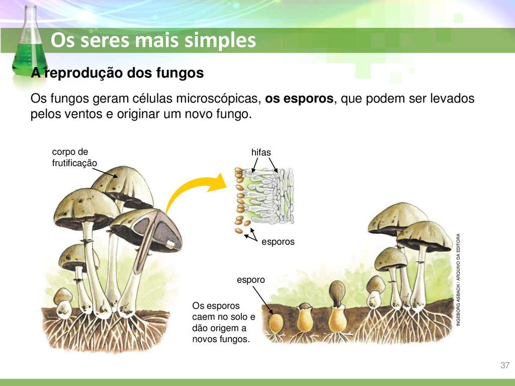 Os seres mais simples A reprodução dos fungos O...