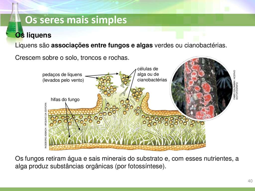 Os seres mais simples Os liquens Os fungos reti...