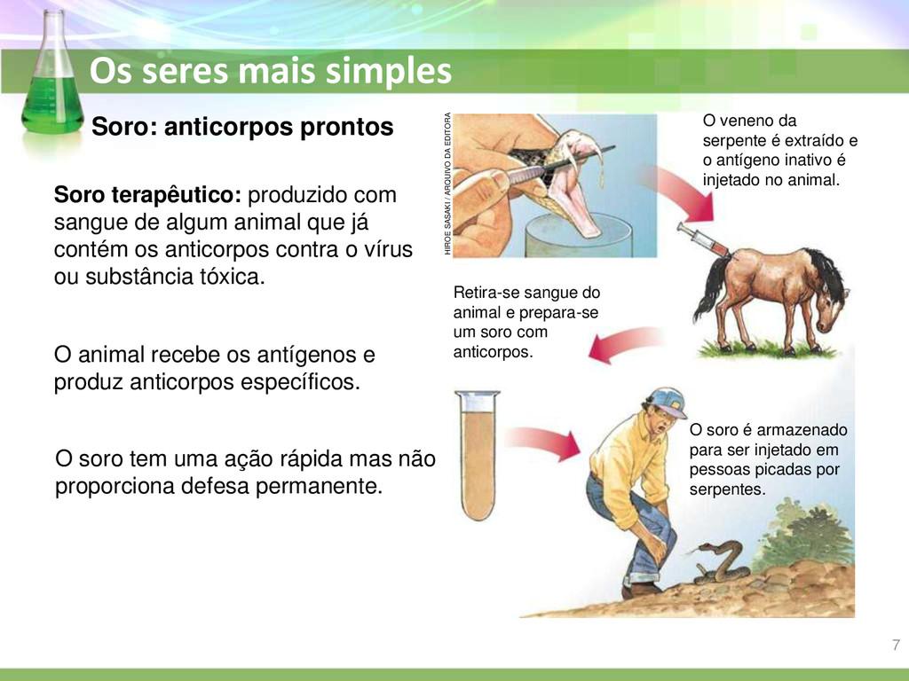 Os seres mais simples O animal recebe os antíge...