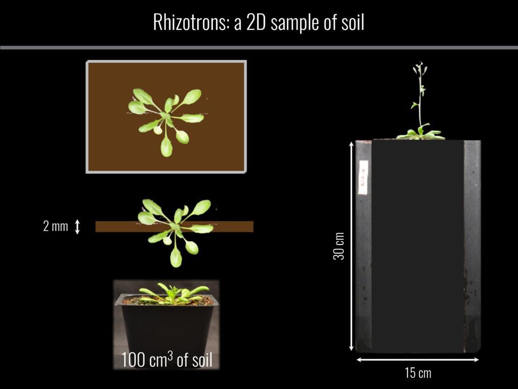 30 cm 15 cm 2 mm 100 cm3 of soil Rhizotrons: a ...