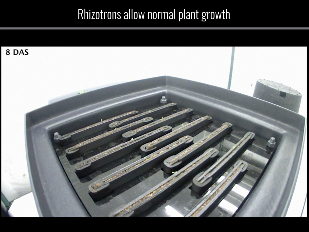 Rhizotrons allow normal plant growth