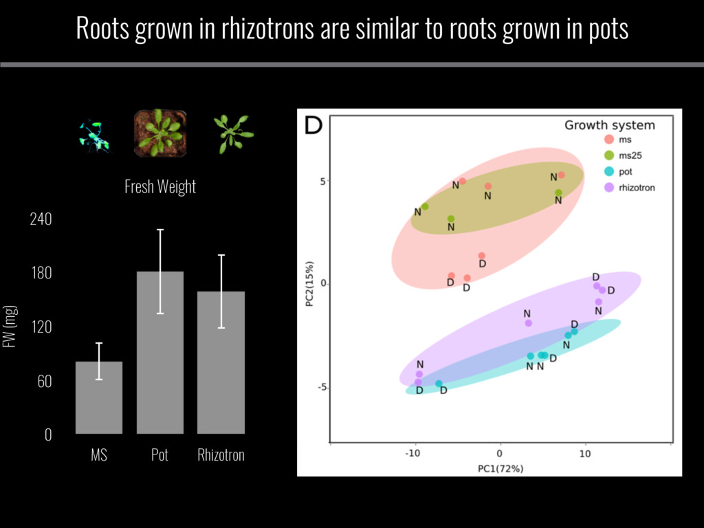 Roots grown in rhizotrons are similar to roots ...
