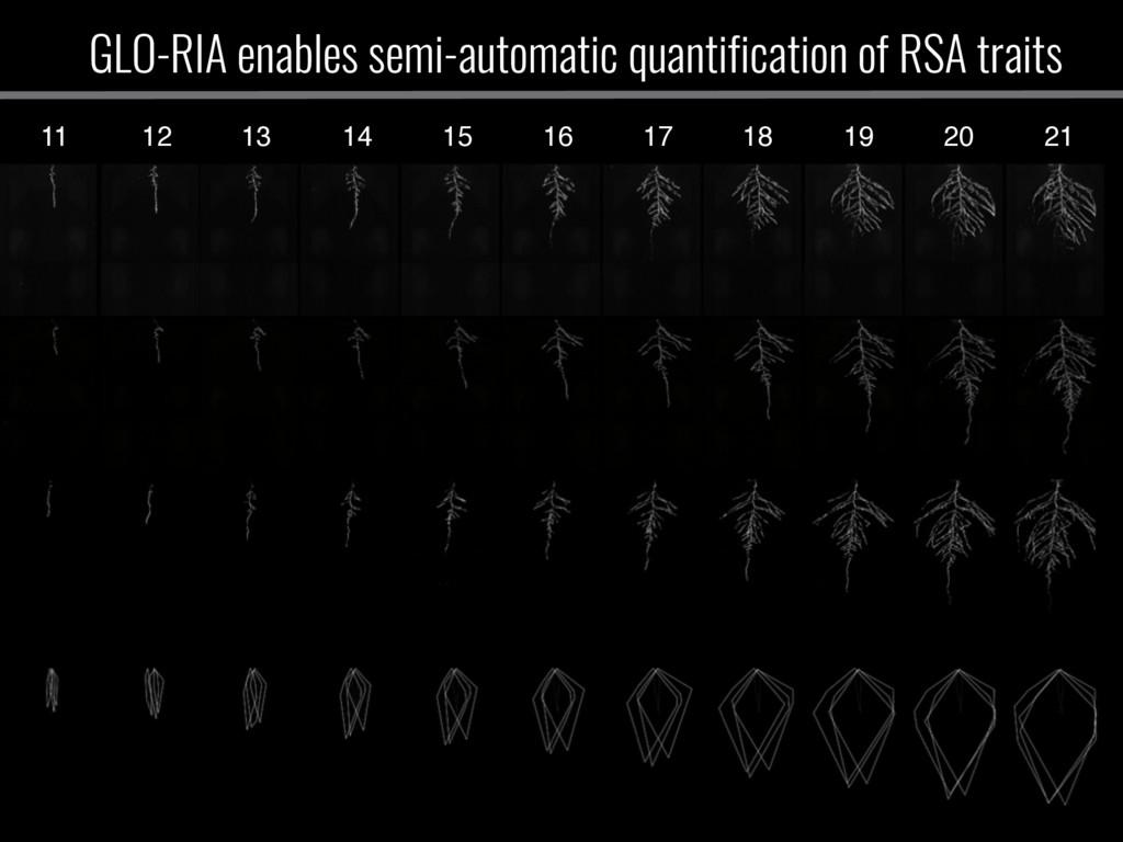 11 12 13 14 15 16 17 18 19 20 21 GLO-RIA enable...