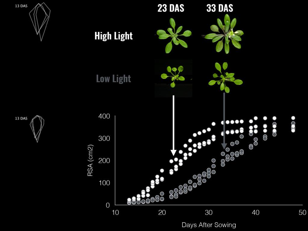 Low Light RSA (cm2) 0 100 200 300 400 Days Afte...