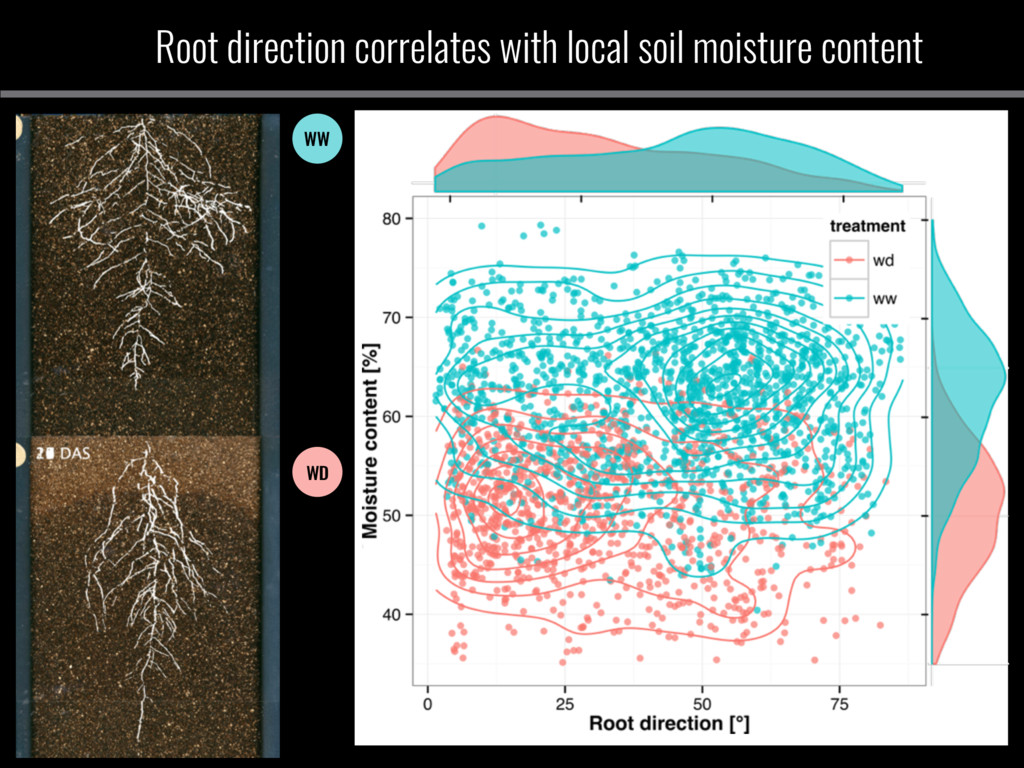Root direction correlates with local soil moist...