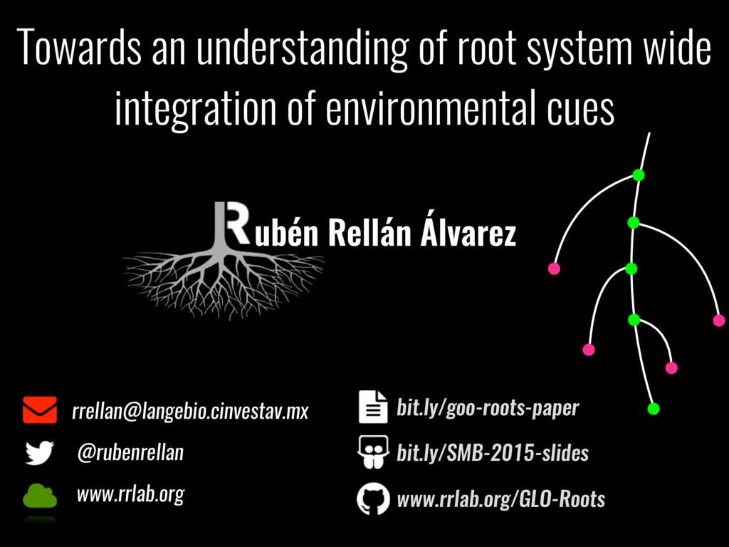 Towards an understanding of root system wide in...