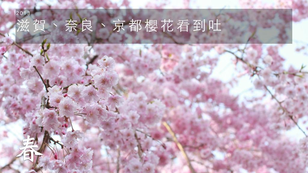 滋 賀 、 奈 良 、 京 都 櫻 花 看 到 吐 2 0 1 3 ݆