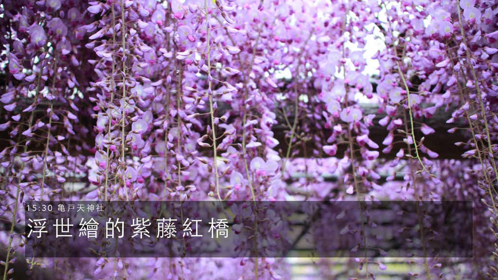 浮 世 繪 的 紫 藤 紅 橋 1 5 : 3 0 ⻲亀 戸 天 神 社