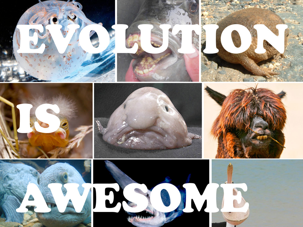 EVOLUTION IS AWESOME